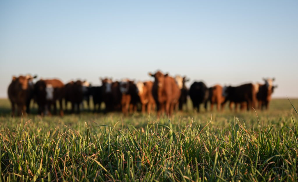ClearFox® wastewater treatment in beef processing